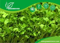 China organnic Radish sprouts seeds with ISO9001-2000 approvals , Green Black Yellow distributor